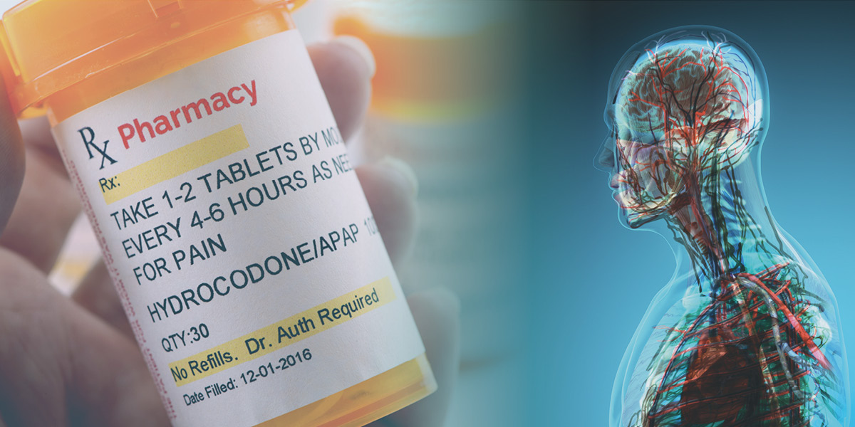 Image of a person holding a hydrocodone prescription bottle next to an image of the human body nervous system