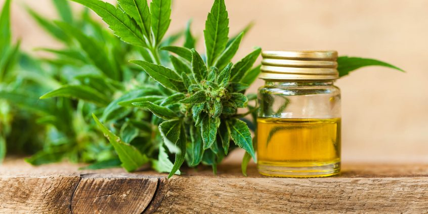 CBD oil next to a marijuana plant, grown to help reduce cravings in heroin addicts