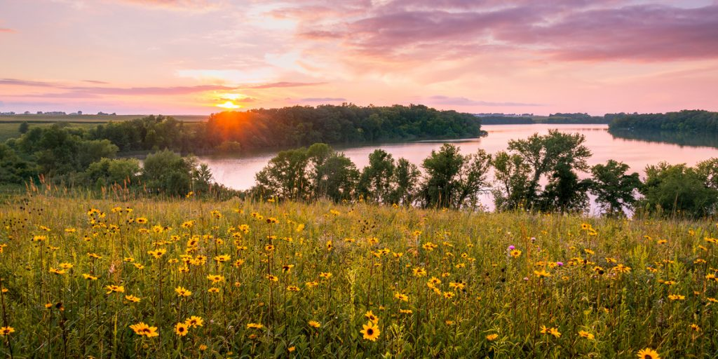 A valley full of yellow flowers during sunset in minnesota